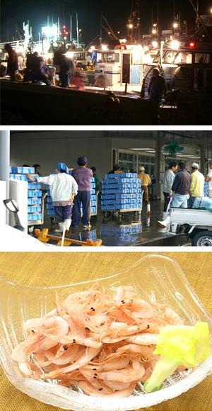 釜揚げ桜えび 漁